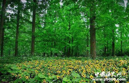 人工造林最多国家人工造林的特点和意义是什么
