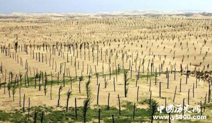 中国成人工造林最多国家人工造林有什么特点和原则?