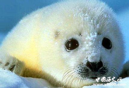 国际海豹日简介国际海豹日主题国际海豹日的活动有哪些?