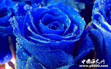 玫瑰为什么代表爱情玫瑰有什么象征意义